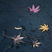 Kit Pancoast Nagamura - Leaves in Black Ice